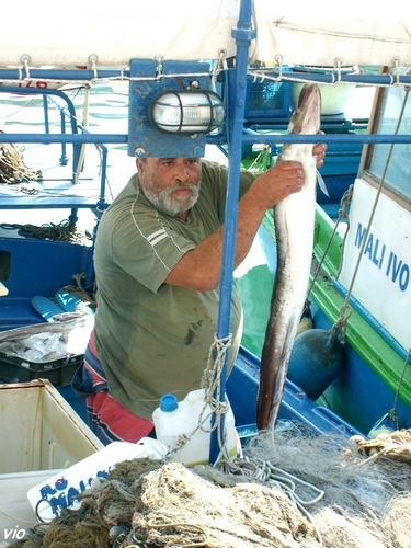Retour de pêche à Jelsa