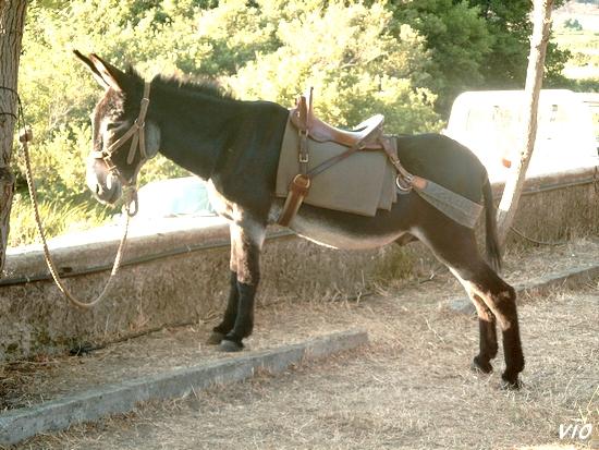 Balade à dos d'âne, durant la foire