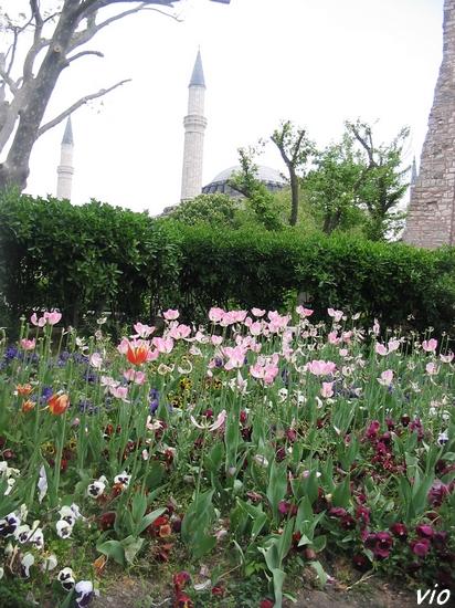 Les minarêts de Sainte-Sophie