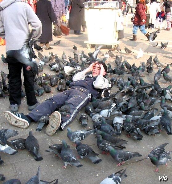 Nourrissage des pigeons sur la place San Marco !