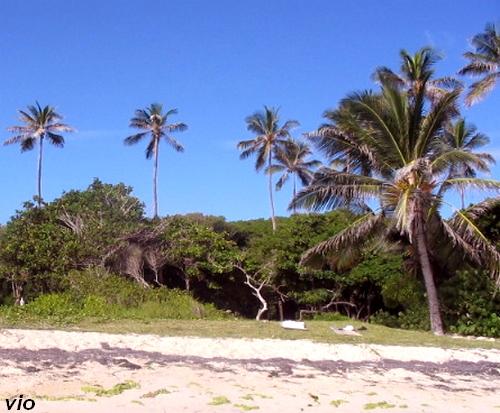 Le paradis existe ... nous l'avons trouvé au Cap Chevalier !
