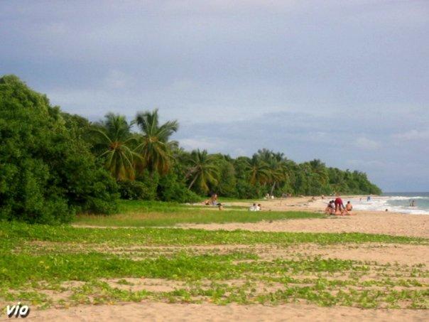 La plage du Cap Chevalier bordée de cocotiers et de palétuviers