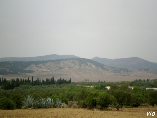 tunisie_aout_07_nabeul-266