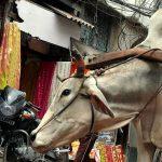 Voyage en Inde, visiter l'incontournable ville de New Delhi