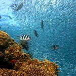 Comment débuter la plongée sous-marine ?